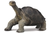 COLLECTA 88619 ŽELVA LONESOME GEORGE