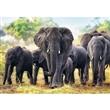 PUZZLE TREFL 10442 1000 dílků SLONI AFRIČTÍ